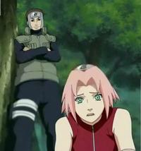 Sakura memantau