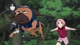 Sai, Pakkun dan Sakura